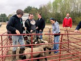 Students and lambs in pen
